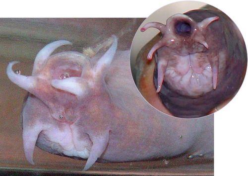 si-hagfish.jpg